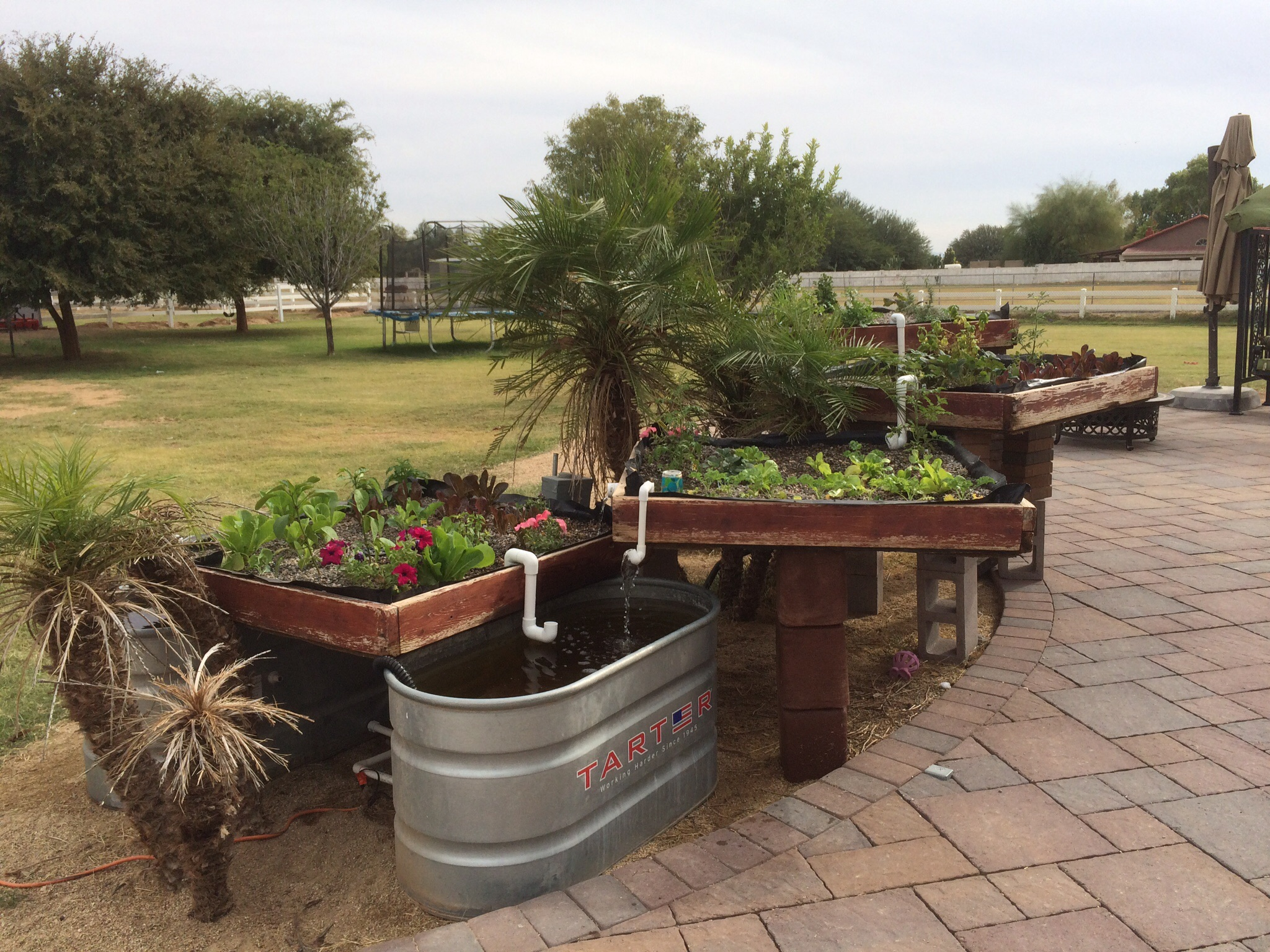 Aquaponics my first attempt the doc the horse for Aquaponics grow bed